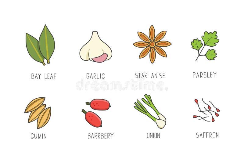 Wektorowy ustawiaj?cy kulinarne pikantno?? i ziele dla tw?j kuchennego projekta lub menu Condiments inkasowi w kreskowej sztuki s ilustracja wektor