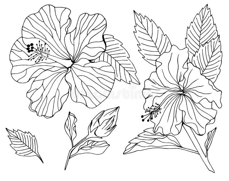 Wektorowy ustawiaj?cy po?lubnika kwiatu element ilustracji