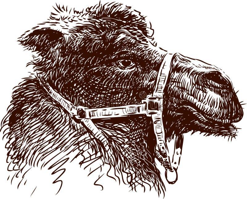 Wielbłąd głowa ilustracja wektor