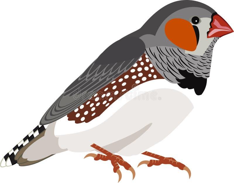 Wektorowy zebry Finch Taeniopygia guttata ilustracja wektor