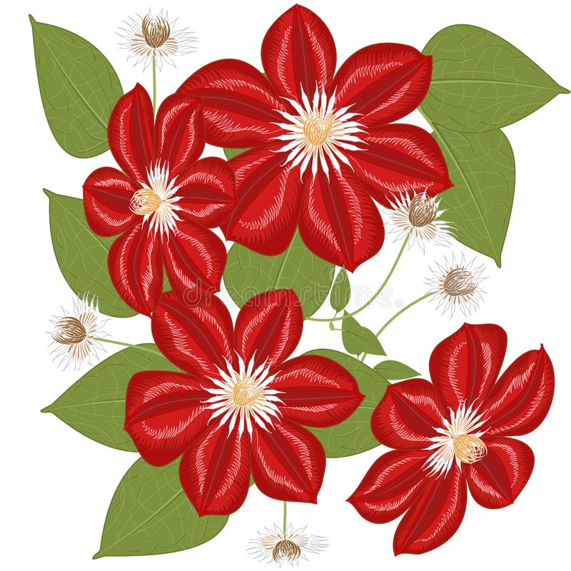 Wektorowych grafika clipart kwiatu Clematis ilustracja wektor
