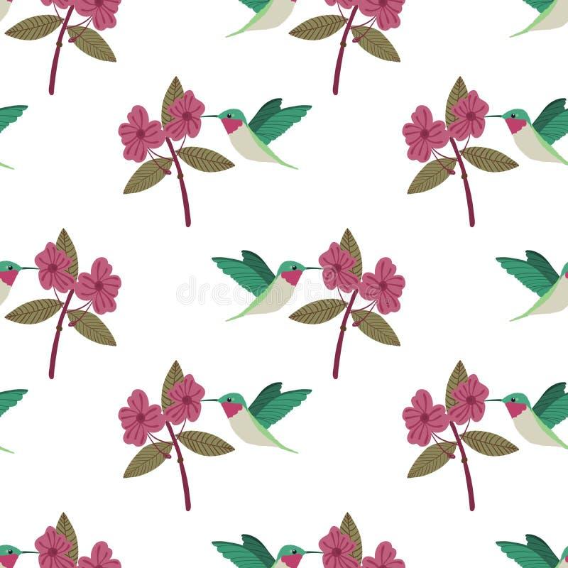 Wektorowych kolorowych egzotycznych hummingbirds bezszwowy wzór na białym tle z czerwonymi kwiatami ilustracji