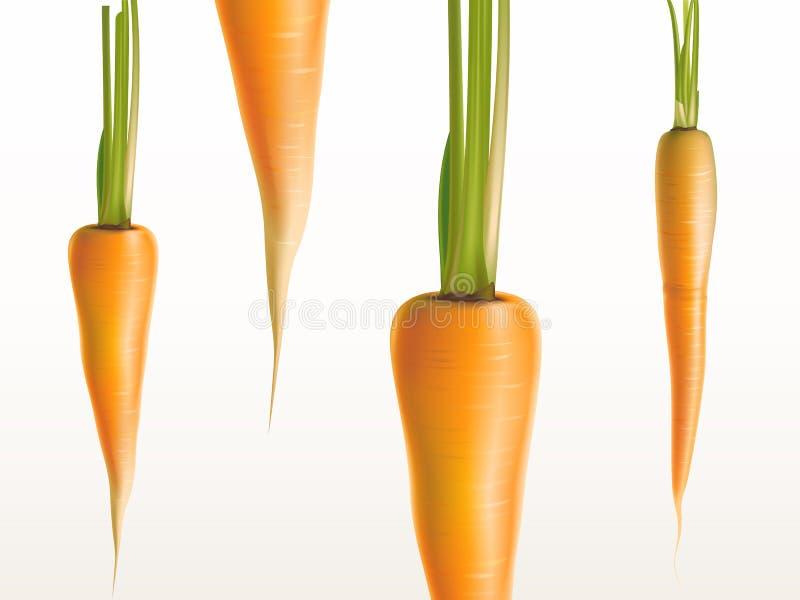 Wektoru 3d realistyczne marchewki - pomarańczowy warzywa tło ilustracji