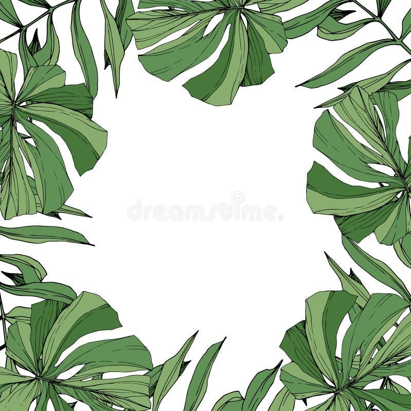 Wektoru liścia Zielonej rośliny botaniczny ulistnienie Grawerująca atrament sztuka Palmy drzewa plażowi liście Ramowy rabatowy or ilustracja wektor