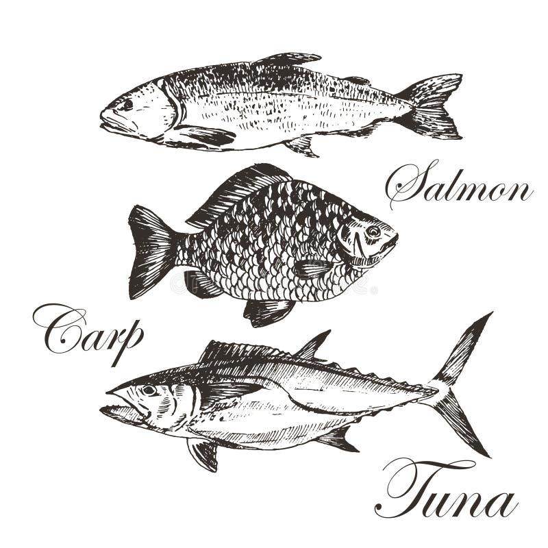 Wektoru nakreślenia rybi rysunek - łosoś, pstrąg, karp, tuńczyk ręka rysująca dennego jedzenia ilustracja ilustracja wektor