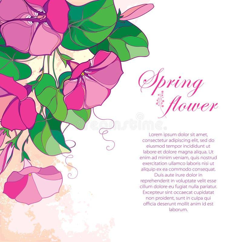 Wektoru narożnikowy bukiet z kwiatem, zielonym liść i pączek na pastelowym tle kontur menchii ranku lub Ipomoea, royalty ilustracja