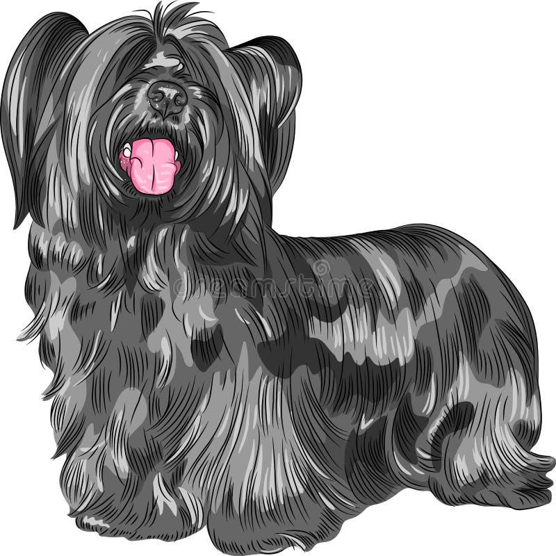 Wektoru Skye Terrier psi traken ilustracji