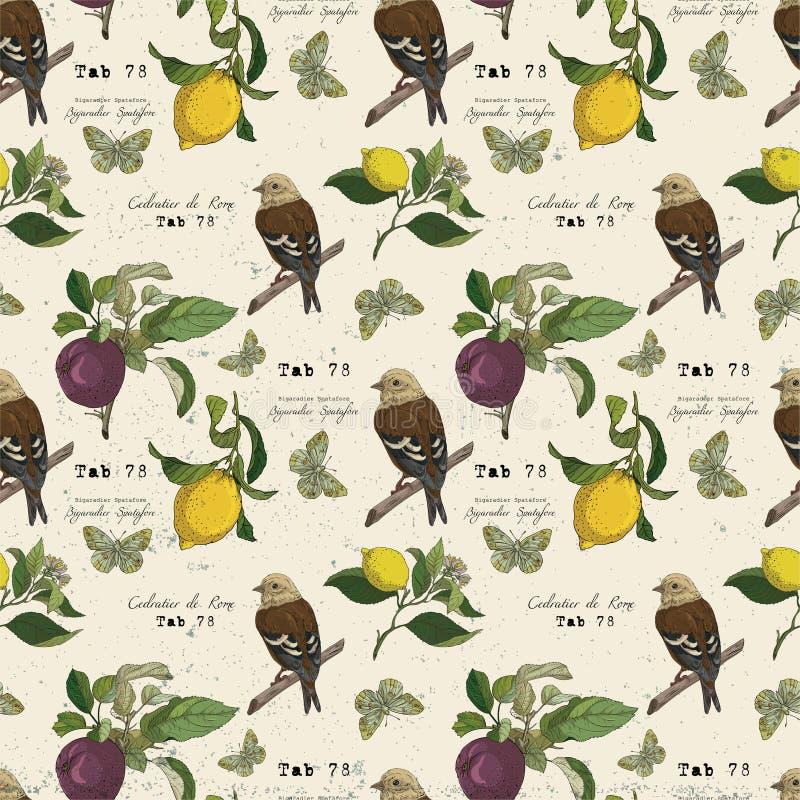 Wektoru wzór z ptakiem i owoc royalty ilustracja