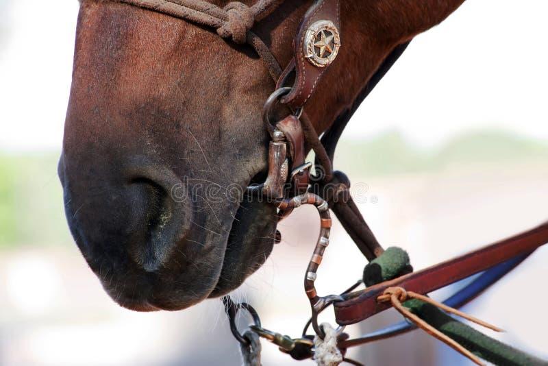 Wekzeugspritze und Mund des Pferds lizenzfreie stockbilder