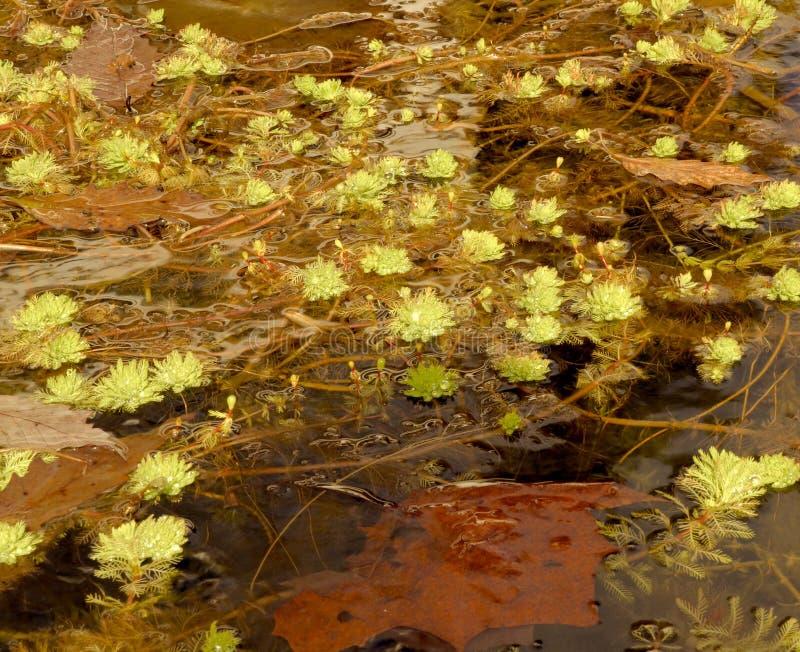 Welche Natur wie im Wasser eines Teichs während des Winters aussieht lizenzfreie stockbilder