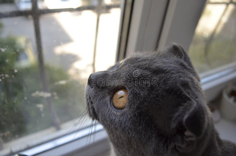?at, welches heraus das Fenster schaut lizenzfreies stockfoto