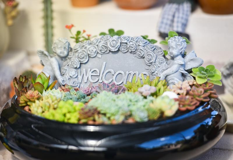 Welcome Plant garden stock photography