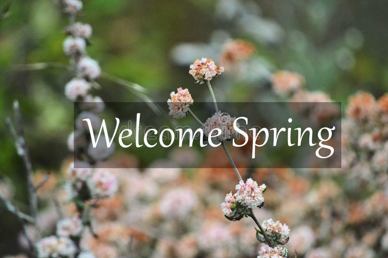 Welcome Spring with Pink Flowers stock photos