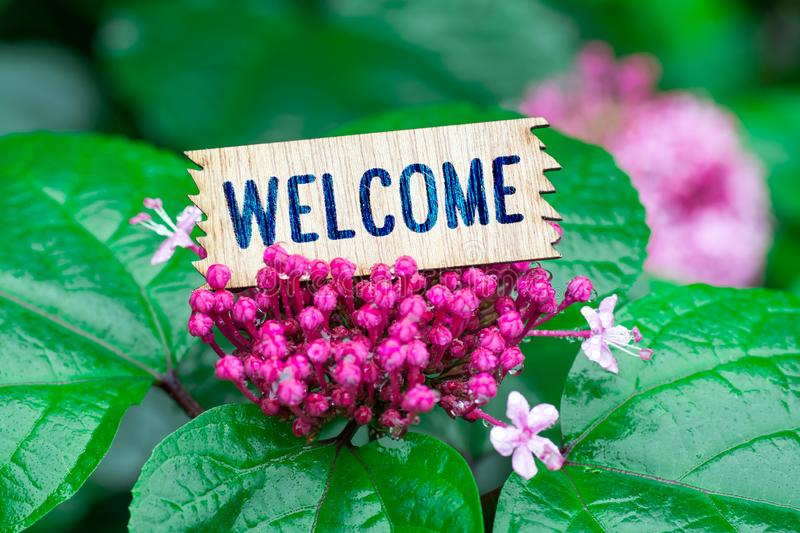 Welcome in wooden card royalty free stock images