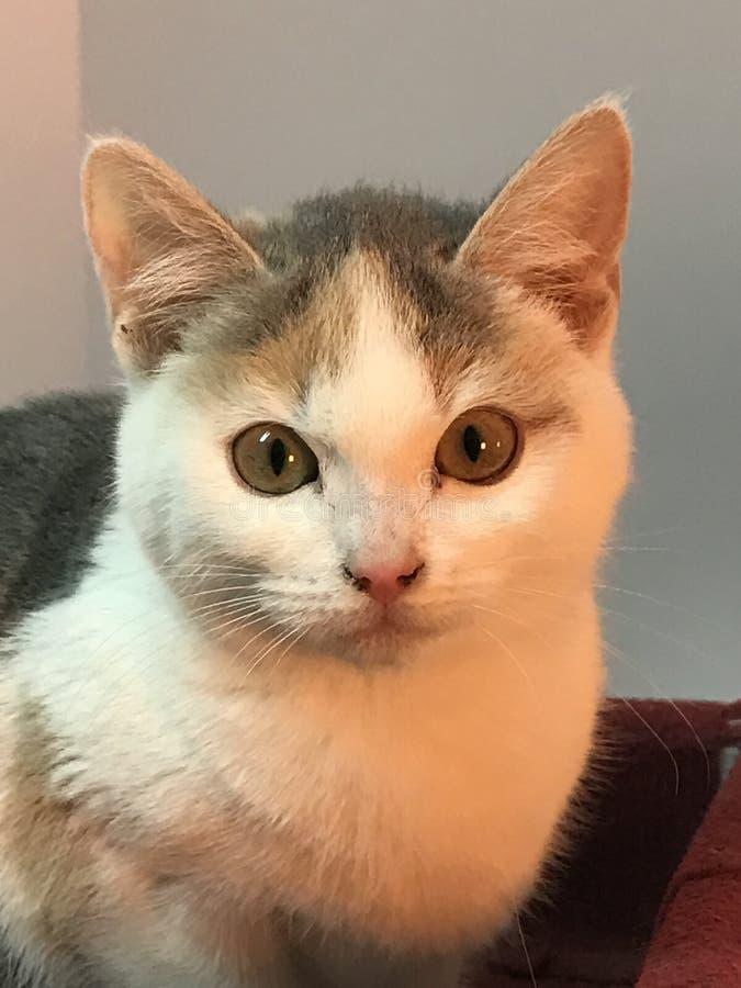 Welk kattengezicht royalty-vrije stock foto's
