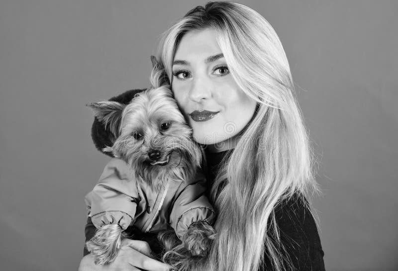 Welke hondrassen lagen zouden moeten dragen Het kleden van hond voor koud weer Zorg ervoor de hond in kleren comfortabel voelt kl royalty-vrije stock foto's