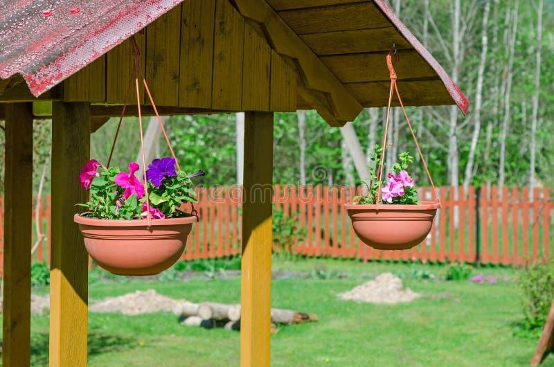 Well dekoracj petunie w garnkach zdjęcia stock
