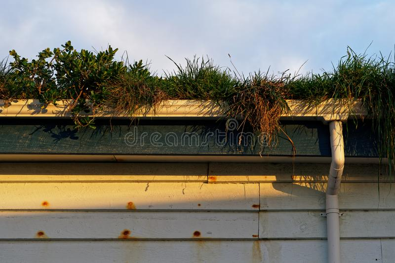 Well overgrown guttering. Overgrown guttering or spouting in need of clearing stock images