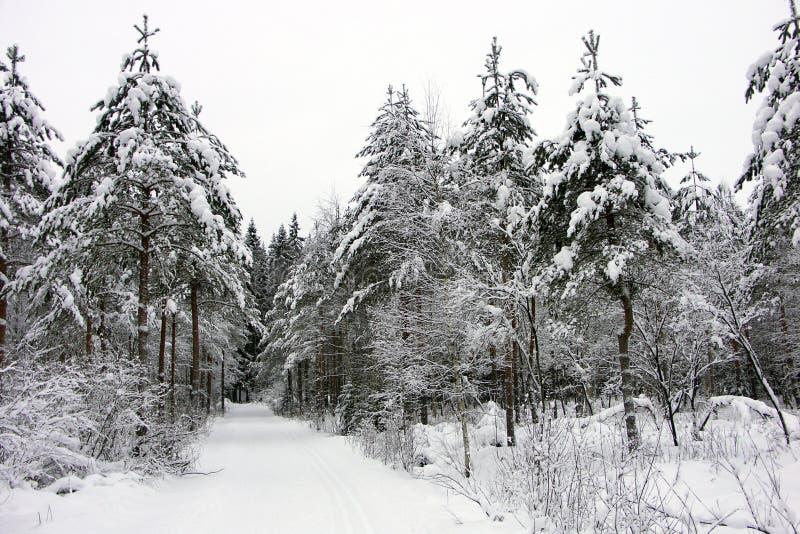 Download Wellcome a un skiwalk imagen de archivo. Imagen de profundamente - 1297177