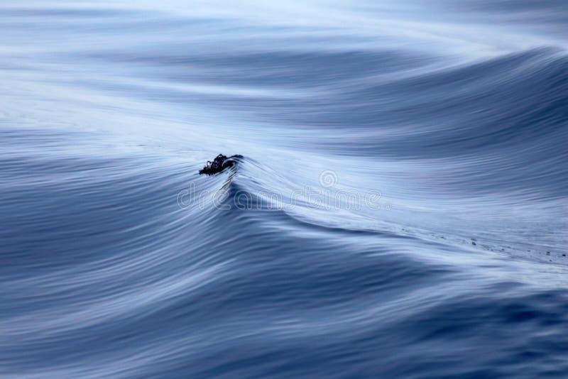 Welle, die in Meer bricht lizenzfreie stockfotografie