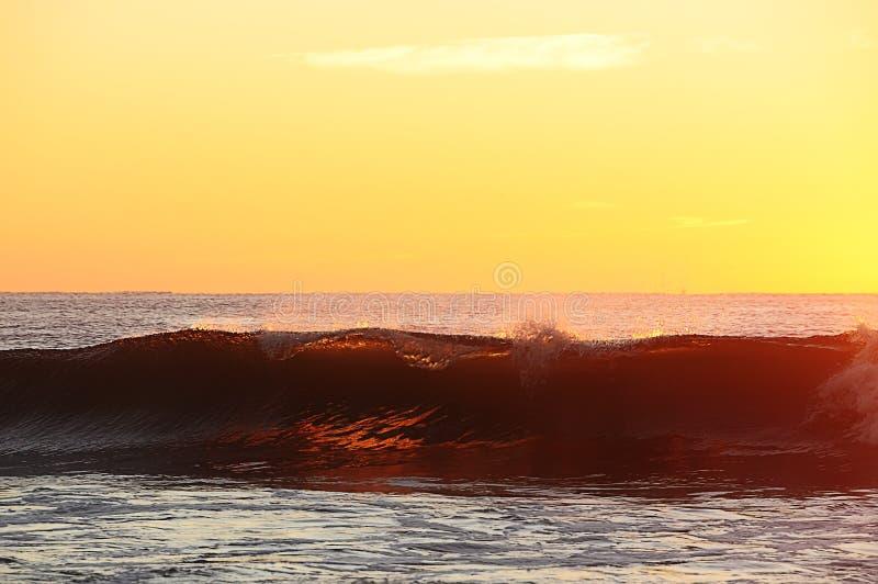 Welle im goldenen Licht des Sonnenaufgangs stockfotos