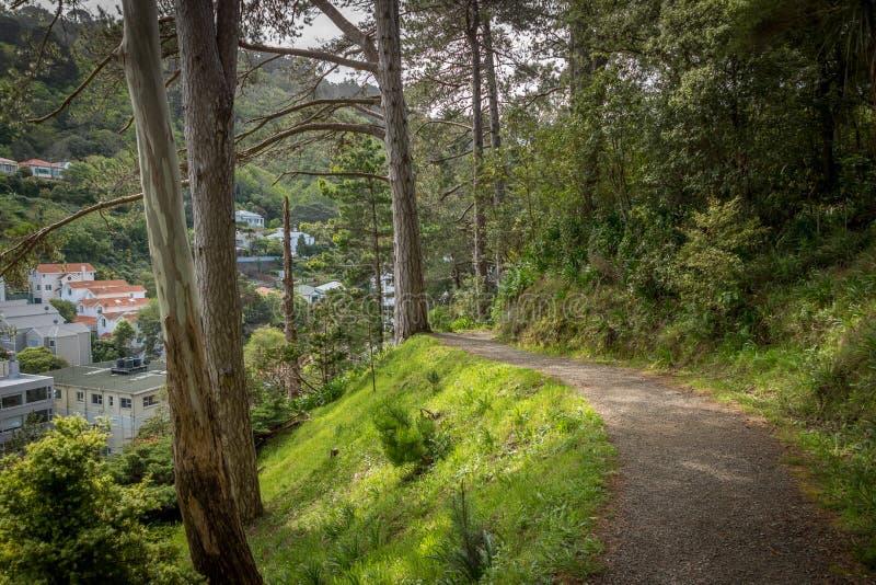 Wellington Botanic Gardens Pathway royaltyfri bild