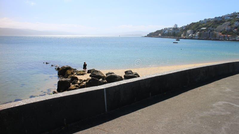 Wellington Harbour immagine stock libera da diritti