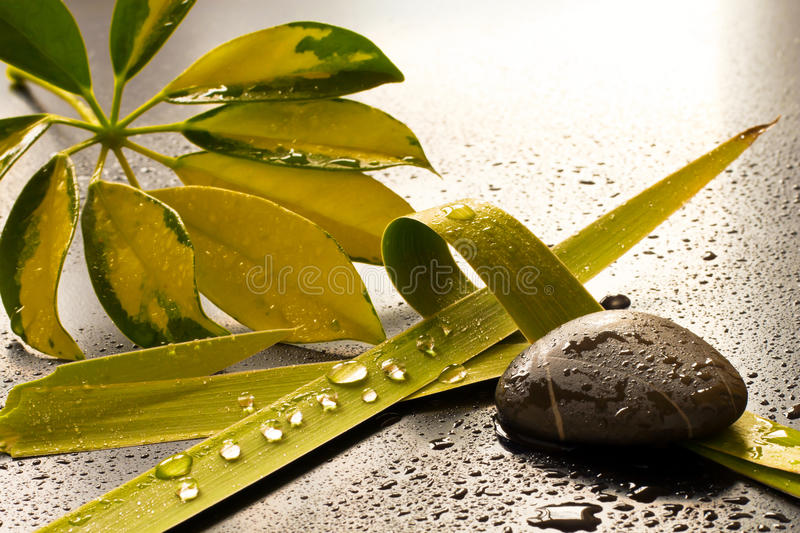 Wellness. Green leaves and stones, drops of water in a dark background stock photo