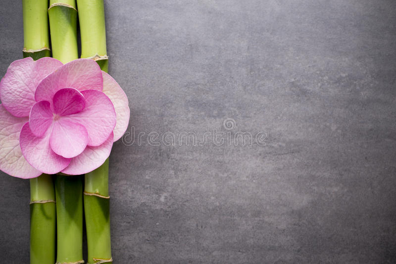 Wellness background  Wellness background. stock photo. Image of collage, pink - 54118490