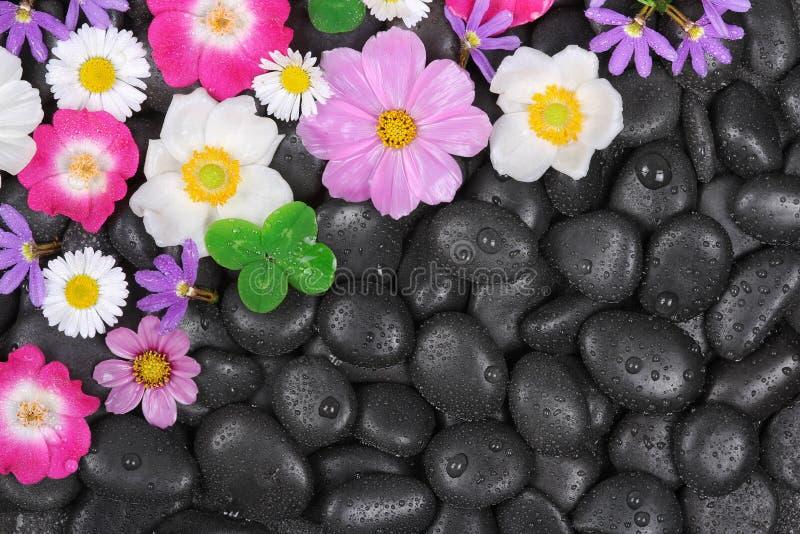 Wellness, gorący kamienie i kwiatu tło, obrazy royalty free