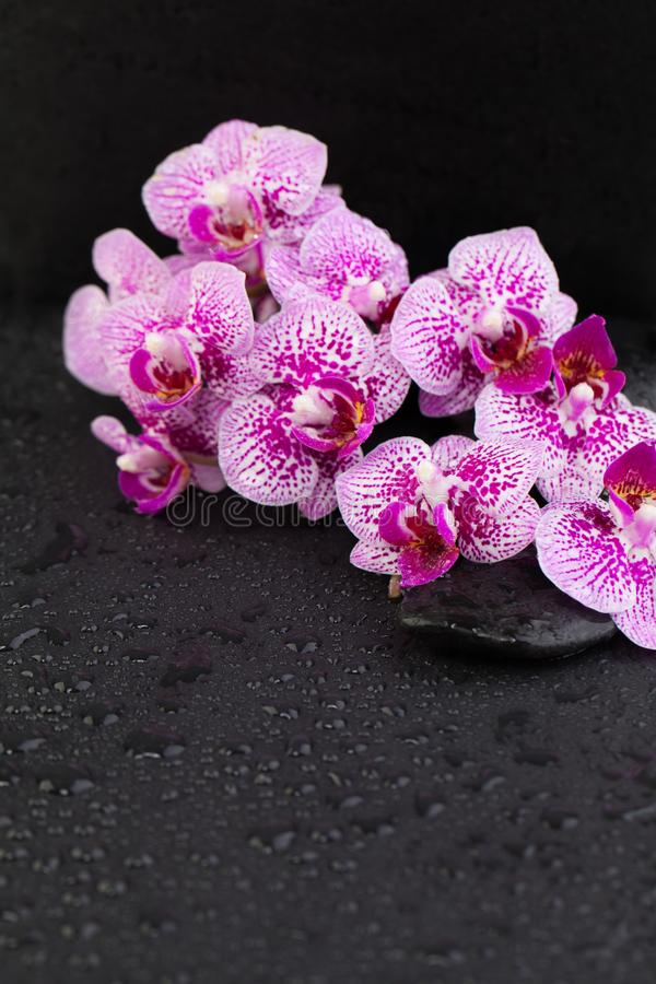 Orchid Zen Stock Photos Download 11887 Royalty Free Photos