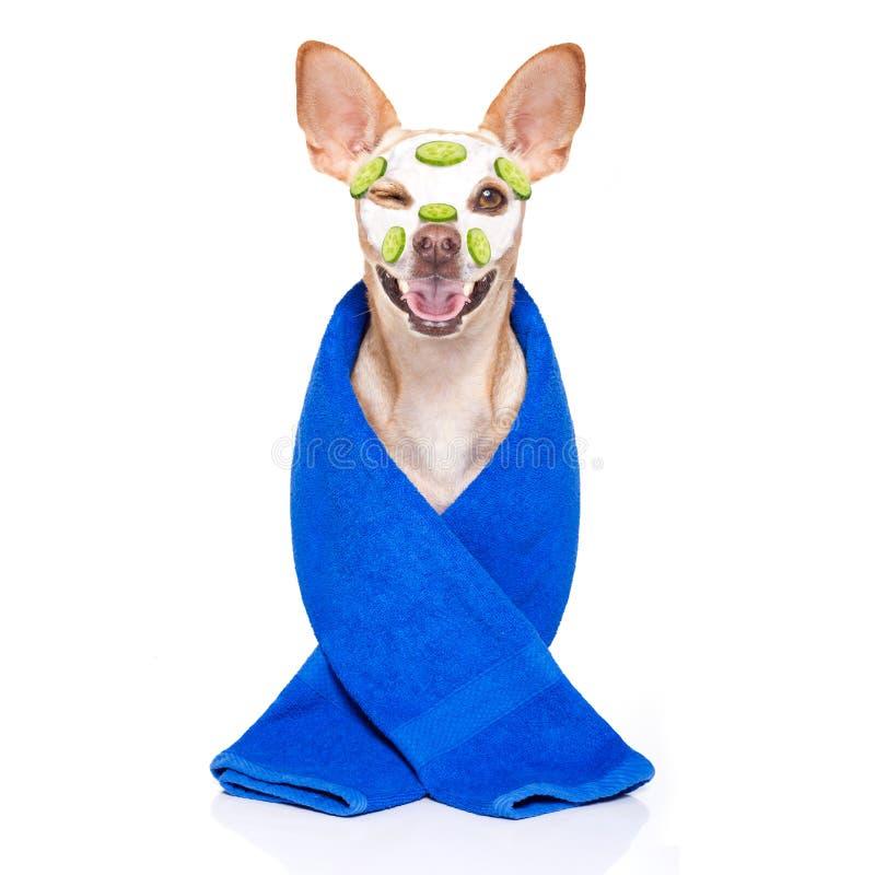 Wellnessbeauty mask spa hond stock afbeelding