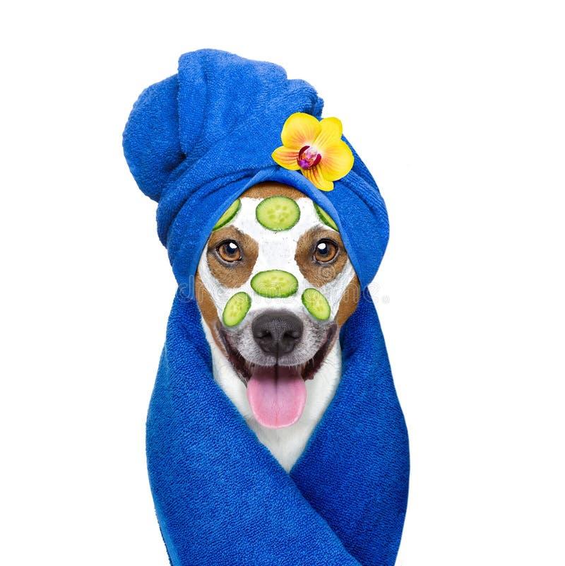 Wellnessbeauty mask spa hond stock foto
