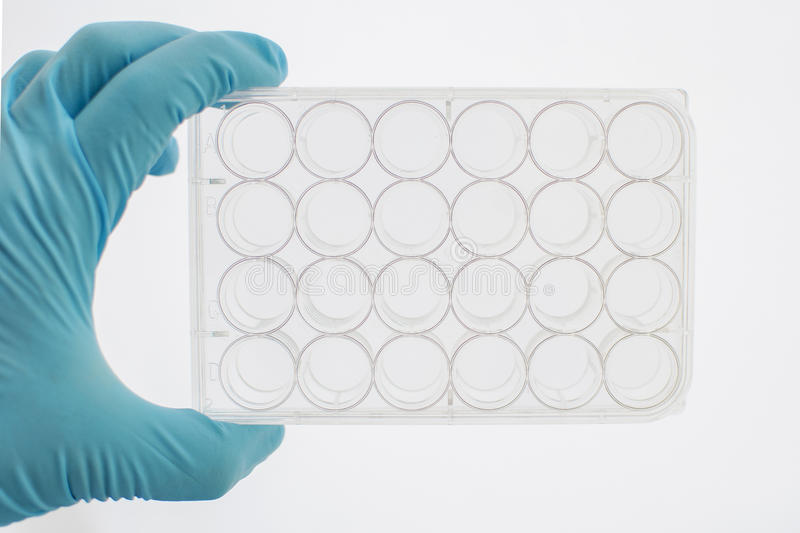 24 wells tissue culture plate. For cell culture stock photo
