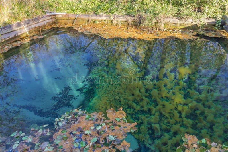 Wellspring de Popovsky Parque nacional de Ugra reserva Región de Kaluga Rusia foto de archivo