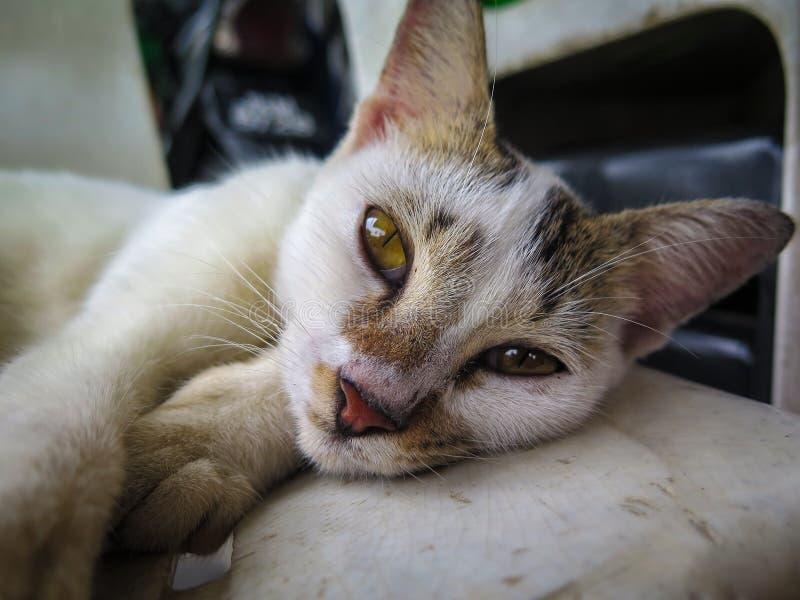 Wellustige Mooie Kat stock afbeelding