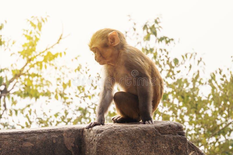 Welp van een aap in openlucht op het strand in Thailand stock afbeeldingen