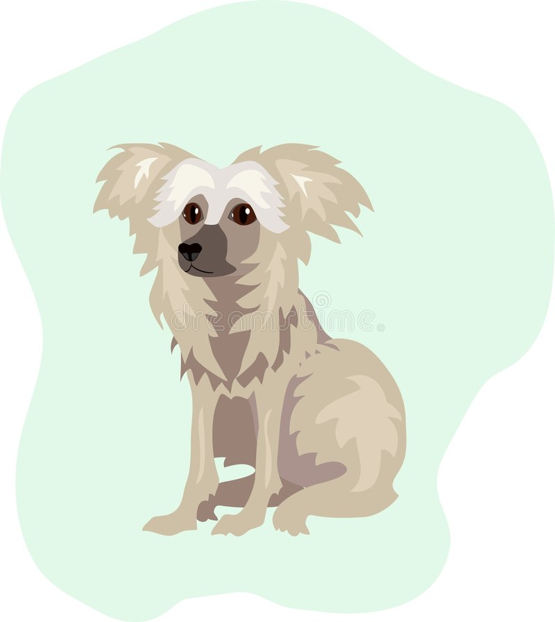 Welpe, Chinese Crested stock abbildung