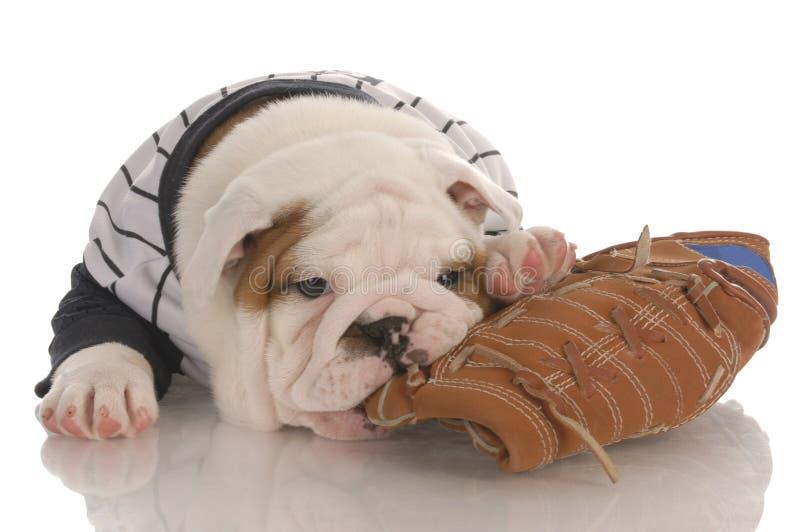 Welpe, der auf Baseballhandschuh kaut lizenzfreies stockbild