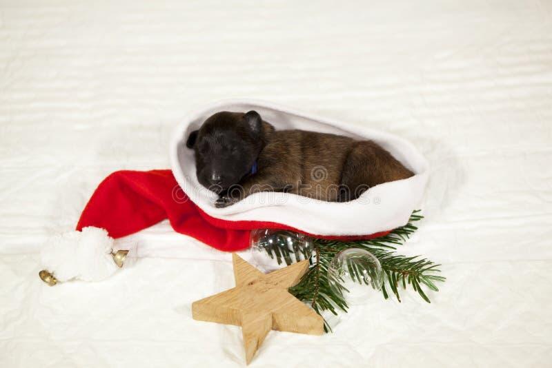 Welpe, der in einem Weihnachtsmann-Hut liegt lizenzfreies stockbild
