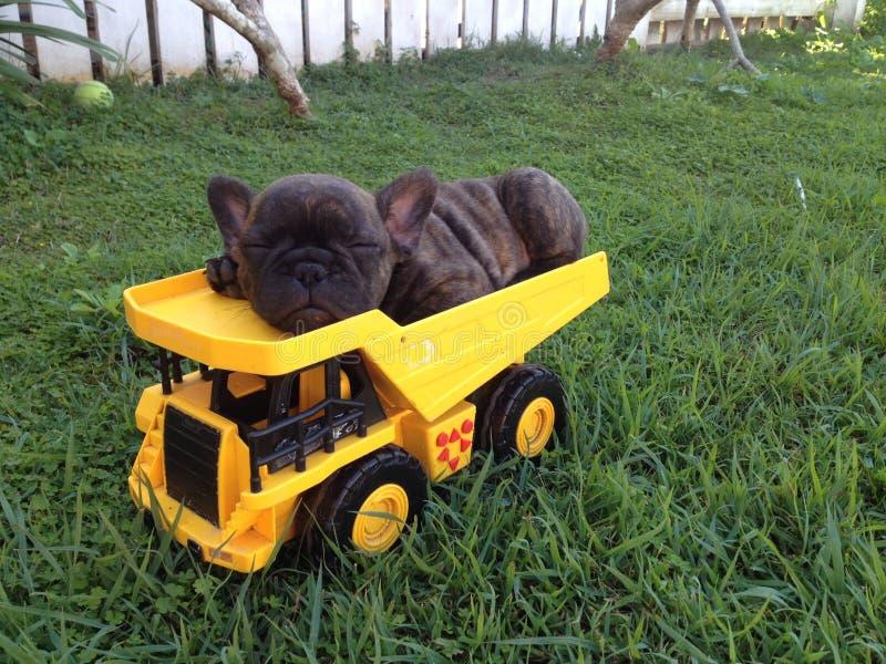 Welpe der französischen Bulldogge nettes Tonka-LKW-Schlafen lizenzfreies stockbild