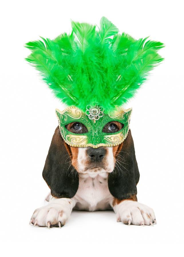 Welpe, der Mardi Gras Mask trägt lizenzfreie stockfotos
