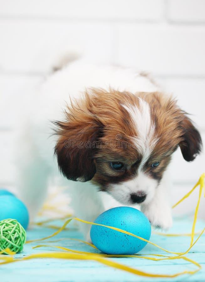 Welpe, der mit Eiern spielt lizenzfreies stockbild