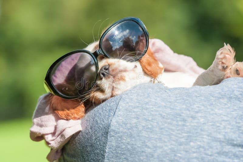 Welpe in der Sonnenbrille lizenzfreies stockbild