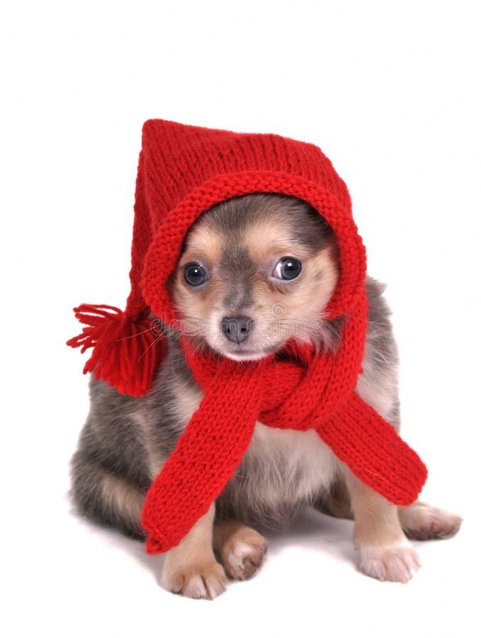 Welpe gekleidet für Weihnachten lizenzfreie stockfotos