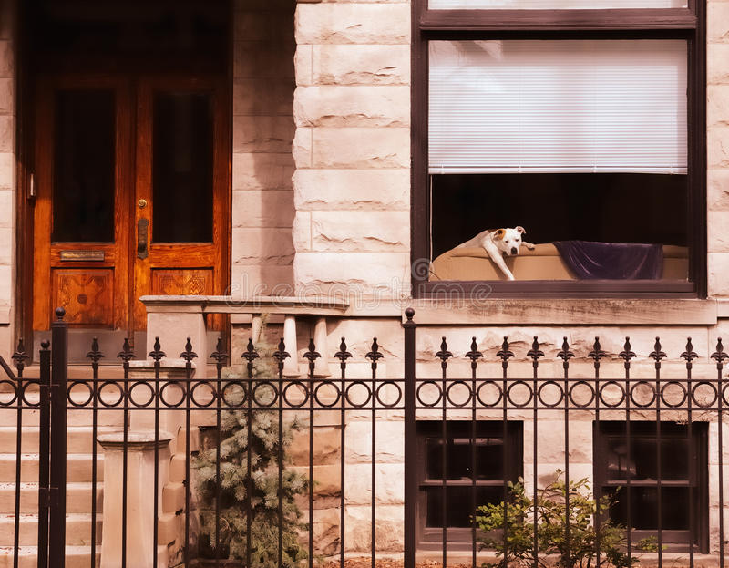 Welpe im Fenster lizenzfreie stockfotografie