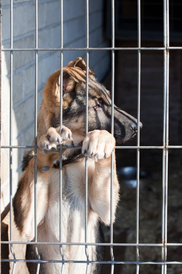 Welpe im Hundepound stockfotografie