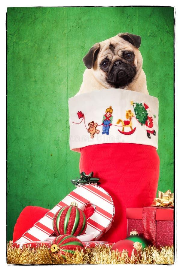 Welpe im Weihnachtsstrumpf stockfotos