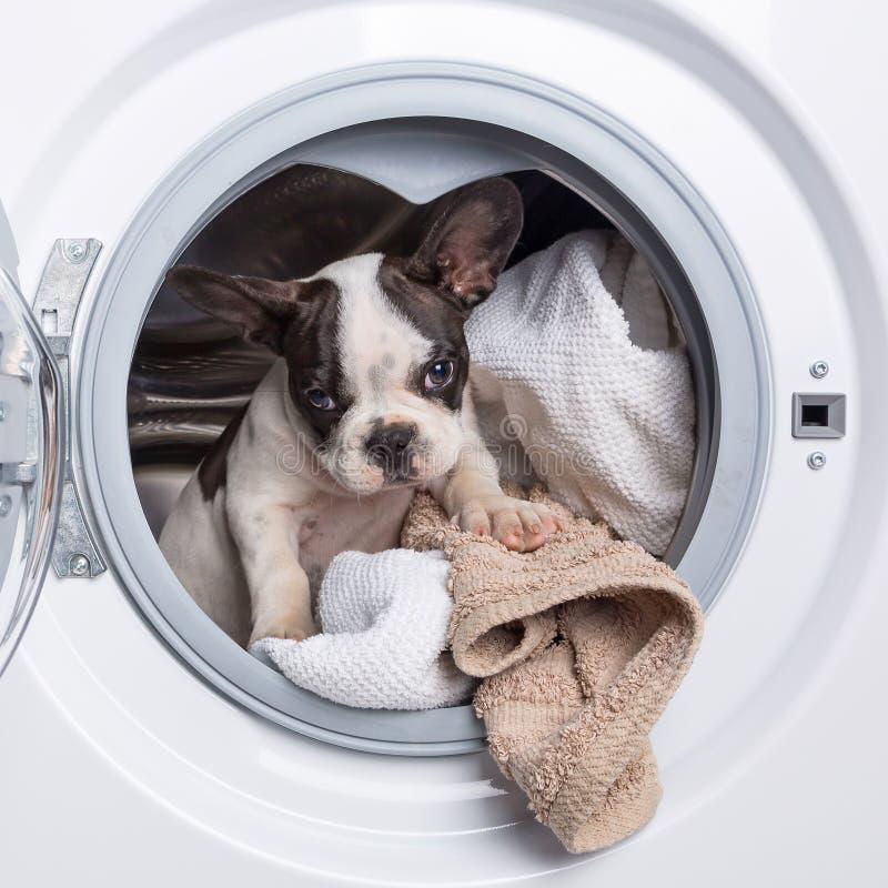 Welpe innerhalb der Waschmaschine stockbilder