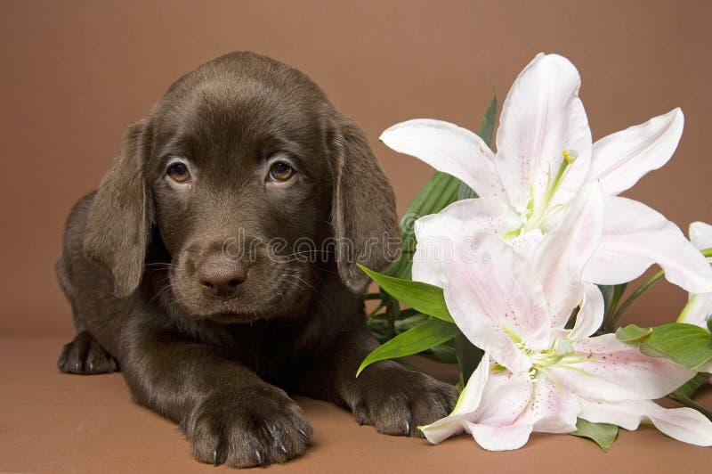 Welpe mit Blume lizenzfreie stockfotografie
